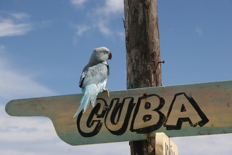 Куба гостеприимна, но к оформлению бумаг на визу стоит подойти ответственно