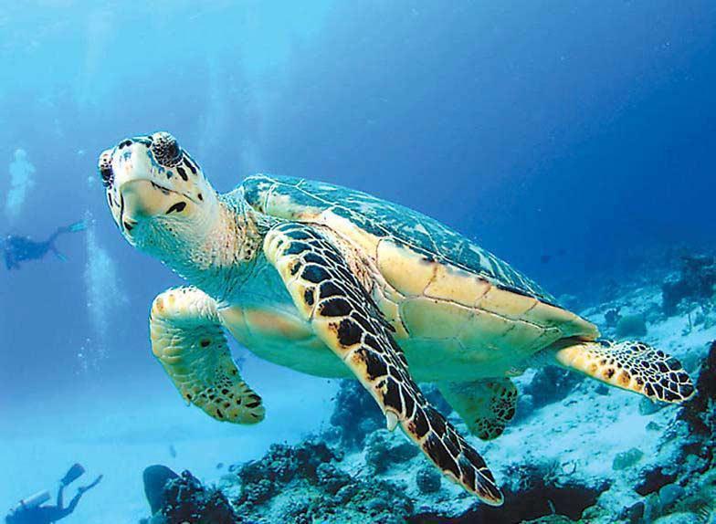 Отдых на австралийском острове Херон - это полное и безусловное единение с природой