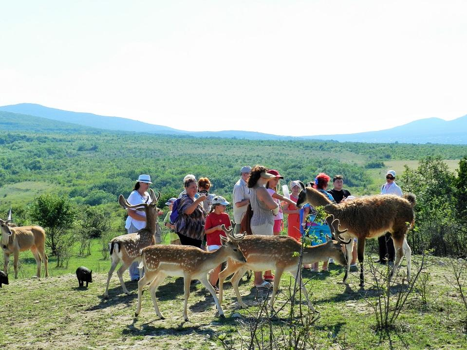 Парк Антилоп в Феодосии