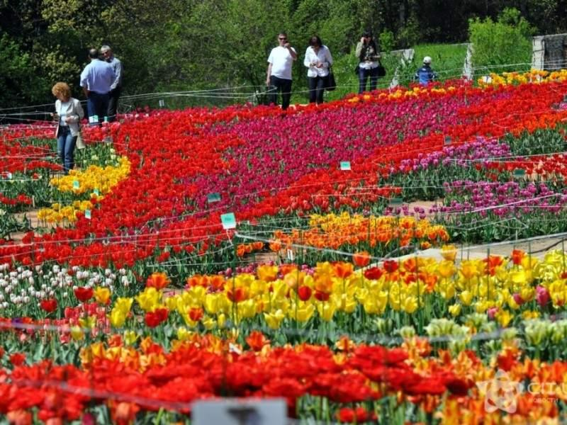 Никитский ботанический сад, Крым