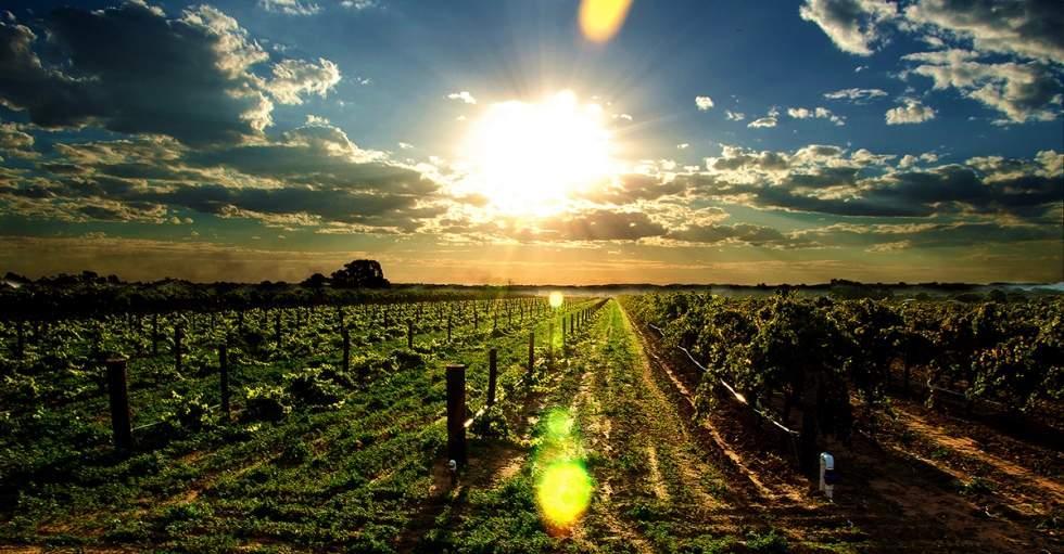 Лучшие местные вина – Barossa Shiraz и Eden Valley Riesling, обязательно попробуйте именно их
